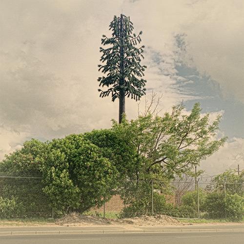 Dillon Marsh, Invasive Species 6, 2009, From Landmarks